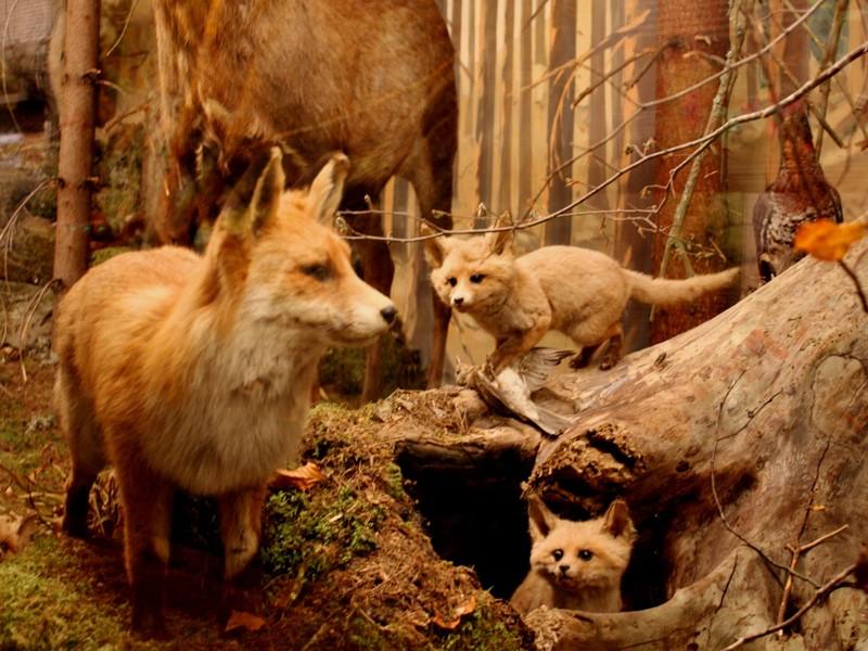 Slovenské múzeum ochrany prírody a jaskyniarstva