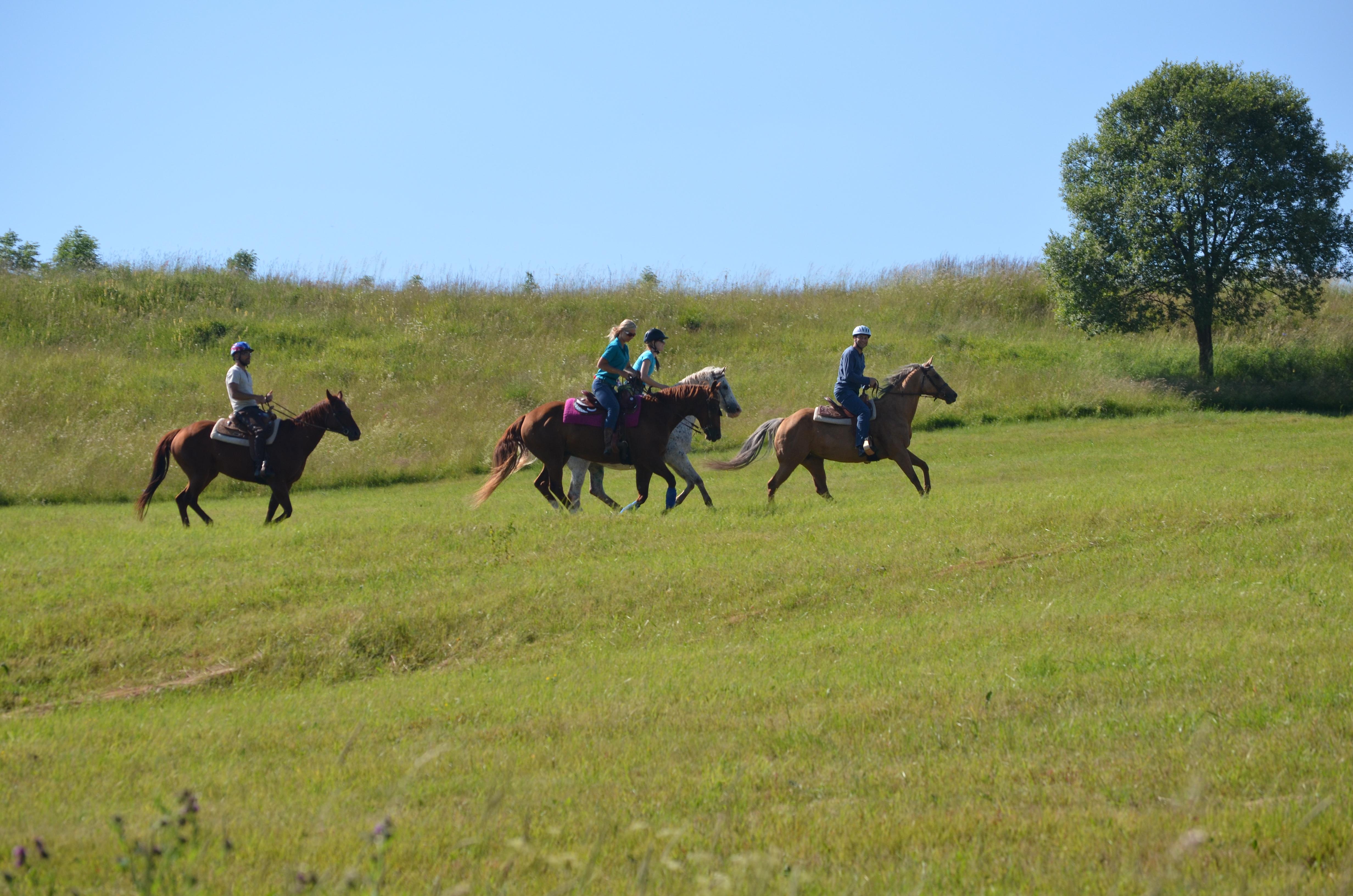 Kone vo Východnej